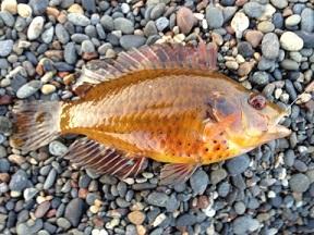 雑魚1.jpg